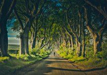 Dark Hedge - Shutterstock Game of thrones