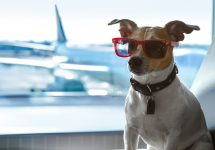 Worried about flying with your pet? Now there's a solution – Shutterstock Digi-Pet