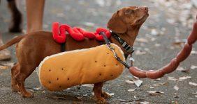 sausage dog gemany BluIz60 / Shutterstock