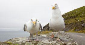 pepperoni pardon seagulls