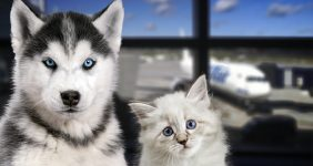 United Airlines ban more than 40 breeds of cats and dogs – Shutterstock United Airlines ban more than 40 breeds of cats and dogs