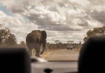 A veces la mejor manera de ver animales es ir a lo salvaje Kruger