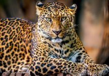 5 best places to see big wild cats