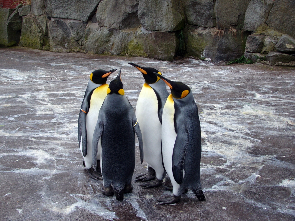 Pinguins in Edinburgh zoo have a rather high status — Shutterstock 15 random and quirky facts about Europe