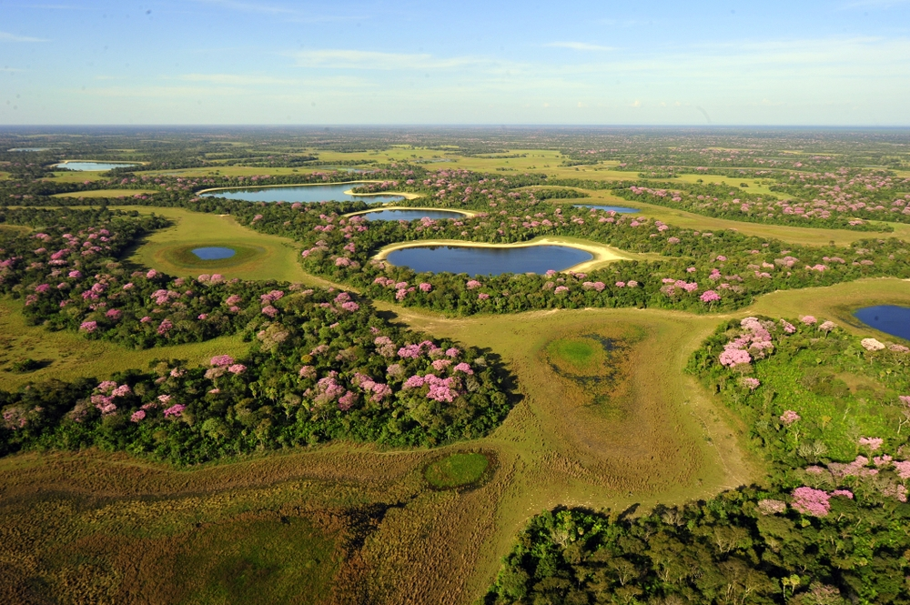 The Pantanal area of around 150,000 square kilometers of a wetland is the largest reserve on the planet — Shutterstock Rio de Janeiro — the gateway to South America