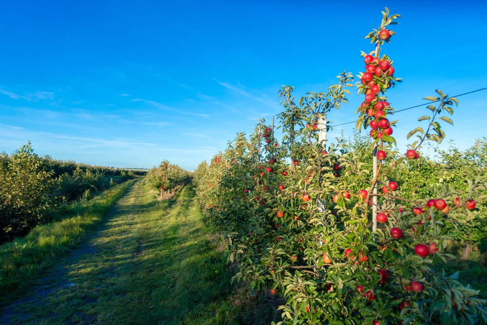 Hire a bicycle and ride between the orchards and pretty little villages — Shutterstock