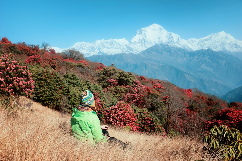 April in the Himalayas sees the rhododendrons in full bloom — Shutterstock